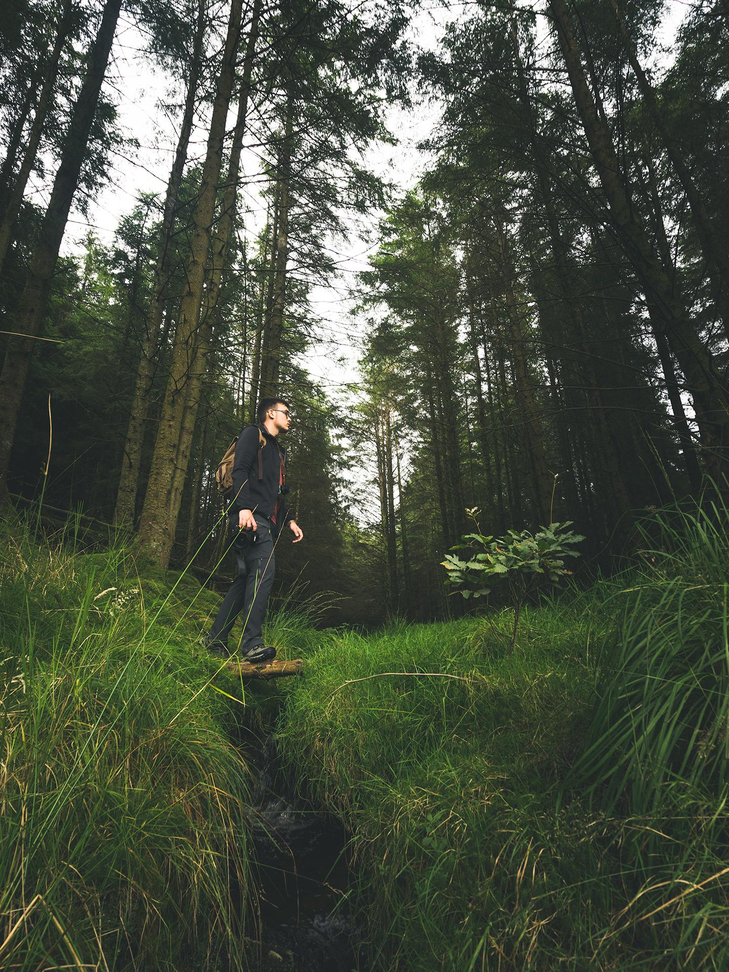 forêt pays de galles